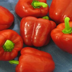 capsicum-indoor-red-fury