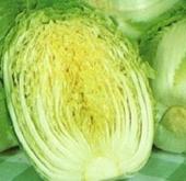 Chinese Cabbage – Bonsai