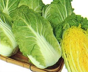 Chinese Cabbage – Kansai