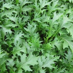 chinese-greens-mizuna-1024x768