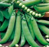 Massey Garden Pea
