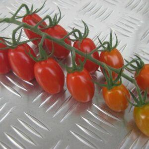 tomato-bellacio-1024x767