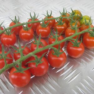 tomato-cherry-indoor-festival-web