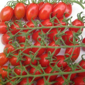 tomato-delicassi-1024x767