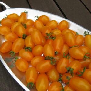 tomato-sweetgold-1024x768