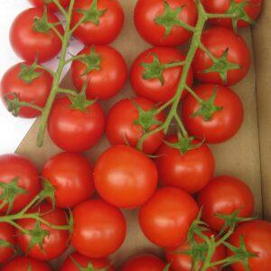 tomato-tmi1121