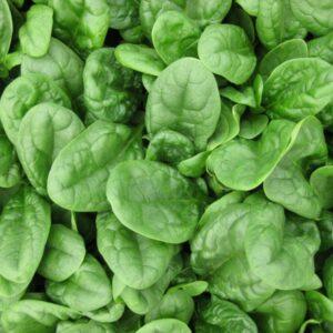 monza-spinach